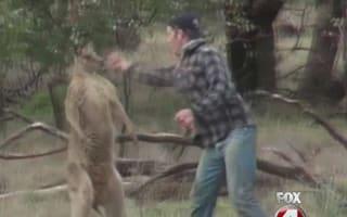 Taronga zoo says it won't fire keeper that punched kangaroo