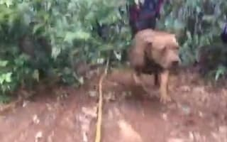 Overjoyed dog rescued after spending a week on a cliff