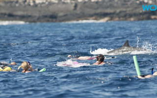Call to ban swimming with dolphins in Hawaii