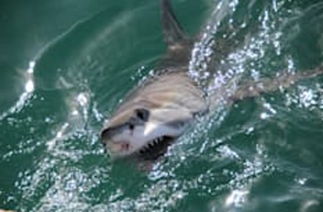 Father in critical condition following horrific shark attack