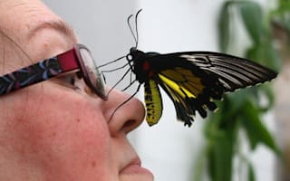 Don't miss the Sensational Butterfly exhibition!