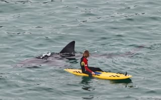 Huge sharks swim with RNLI lifeguards in Cornwall
