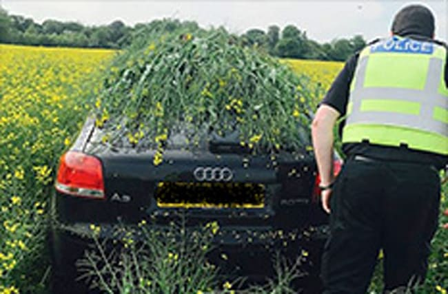 Thieves using rapeseed fields to hide stolen cars