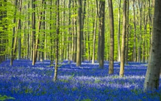 Six ways the forest can improve your mental health