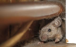 Top five ways to get rid of mice