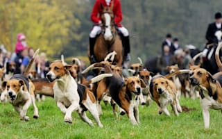Hunting hounds attacks pet dog on Cornwall beach