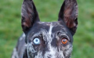 Dog named after David Bowie in search of new home