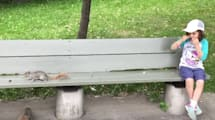 Hungriges Eichhörnchen zieht Zahn