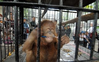 Singer Morrissey calls for closure of 'horror' Indonesian zoo