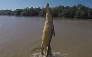 Terrifying video shows how high crocodiles can jump