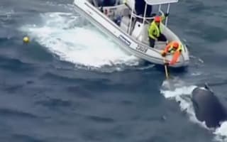 Baby whale in dramatic rescue from shark net (video)