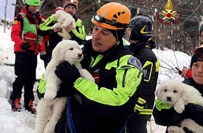 Three puppies rescued from Italian avalanche hotel