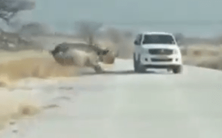 Rhino rams parked car on safari in Namibia