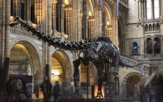 Dippy the Dinosaur's last day at Natural History Museum