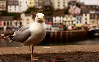 Seagulls dying after getting 'drunk' on flying ants