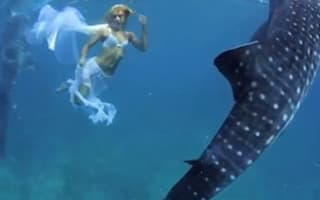 Beautiful creatures! Models swim with whale sharks in the Philippines