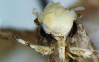 New moth species named after Donald Trump