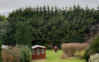 Neighbours at loggerheads over 50ft hedge