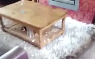 Why you shouldn't leave your dog at home alone
