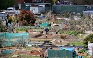 Grow your own and save £1,000 a year