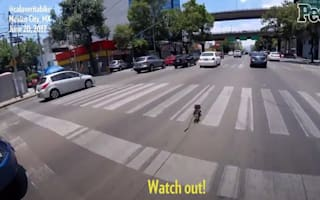 Heroic cyclist rescues runaway dog
