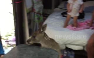 Cheeky kangaroo hops on board family camper van