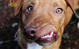 This rescue dog looks like a Picasso painting