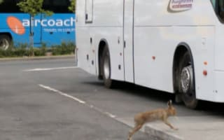 Tourist spots hare with 'cigarette' in mouth at Dublin Airport