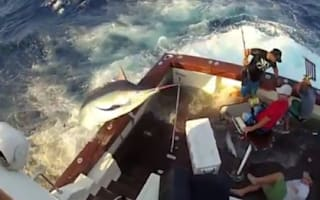 Video: Giant marlin fish comes crashing onto boat deck