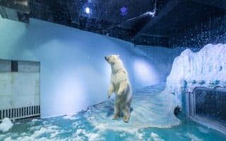 'World's saddest polar bear offered new home in UK
