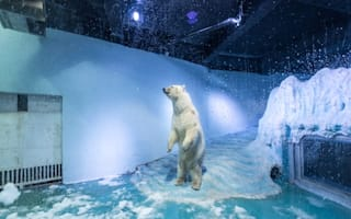'World's saddest polar bear offered new home in UK