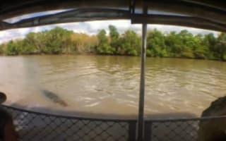 Crocodile launches at tourist boat in Australia