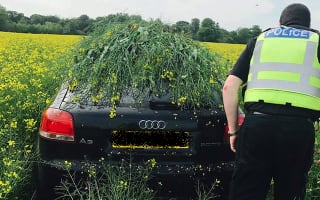 Criminals could be using rapeseed fields to hide cars