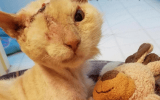 Cat attacked with acid finds comfort in teddy bear