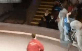 Woman splits trousers while riding a circus camel (video)