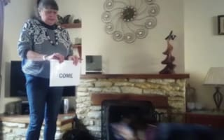 Amazing skills of rescue dog who can read