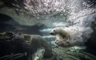 Polar bear dies of 'broken heart' at San Diego zoo