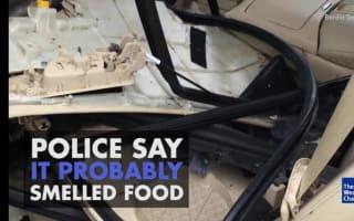 Bear damages car in hunt for food