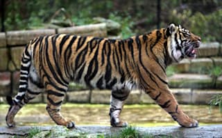 Zoo bans visitors from wearing animal prints