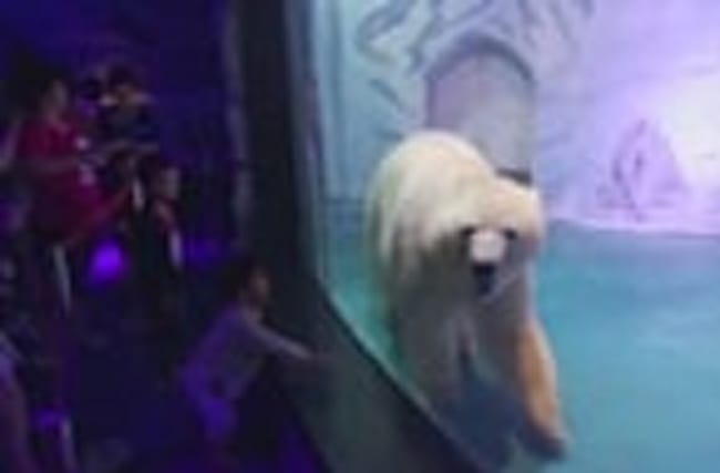 One million fight to free 'world's saddest polar bear'