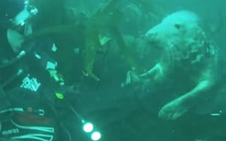 Video: Seal refuses to leave teenage diver's side off Isle of Man