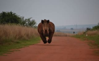 Terrifying moment rhino charges at family's car on safari