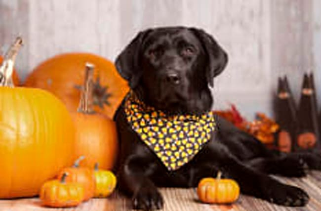 How to keep your pets safe and happy this Halloween