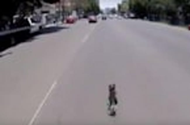 Spektakuläre Flucht: Terrier hat Riesenglück!