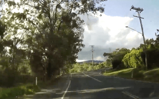 Giant tree branch falls on car in terrifying video