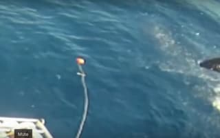 Great white shark leaps though air off Mexico coast (video)
