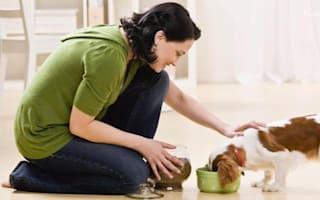 Five ways your dog shows you love