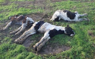 RSPCA warning over increase in dumped horses