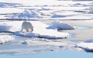 Scientists trapped in Arctic by polar bears