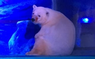 Polar bear used for selfies at 'world's saddest zoo'